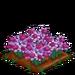 Lilac Daffy extra100