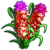 Red Torch Tulip-icon