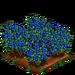Organic Blueberries 100