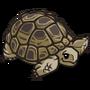 Desert Tortoise-icon