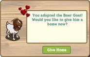 Happy Boer-Goat
