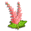 Pink Astilbe-icon