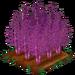 Purple Asparagus extra100