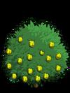 Alma Fig Tree2-icon