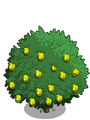 Alma Fig Tree2-icon.png