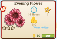 Evening Flower Market Info