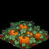 Pumpkin-bloom