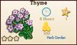 Thyme Market Info