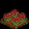 RedTulips-bloom
