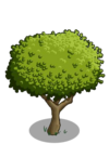 Apple Tree1-icon