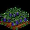 Eggplant-bloom