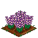 Gladiolus extra100