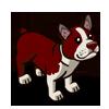Brown Boston Terrier-icon