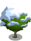 Asian Pear Tree7-icon