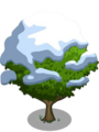 Asian Pear Tree7-icon.png