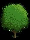 Blood Orange Tree1-icon