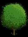 Blood Orange Tree1-icon.png
