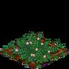 Cranberries-66