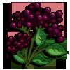 Elderberries-icon