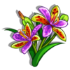 Queen Sheba Orchid-icon