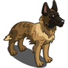 Dutch Shepherd-icon