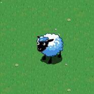 Fan sheep