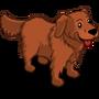 Golden Retriever Adult Mahogany-icon