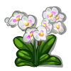 Light Orchid-icon