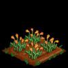 Sun poppies 66