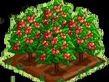 Crystal Cranberry