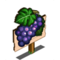 Pinot Noir Mastery Sign-icon