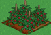 Raspberry 100