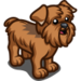 Brussels Griffon-icon