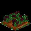 Elderberry extra100