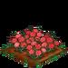 Pink Carnation 100