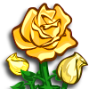 Yellow Roses-icon