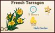 French Tarragon Market Info