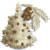 Albino Redwood Tree-icon