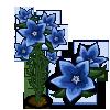 Chinese Bellflower Full Bloom-icon
