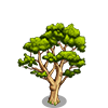River Red Gum Tree-icon