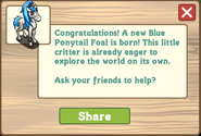 Blue ponytail foal message