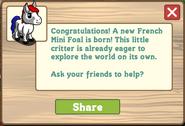 French mini foal