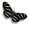 Zebra Butterfly-icon