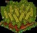 Australian Wheat 100
