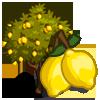 LemonTree-icon