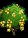 Starfruit2-icon