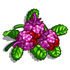Water Berries-icon