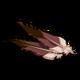 Falcon Feathers-icon