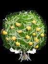 Grapefruit4-icon