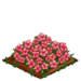 Pink Hibiscus extra100